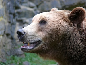 don't try to fight a bear market